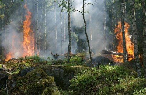 Amazônia agonizando e cadê a grande mídia?