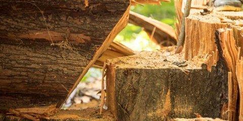 Entenda a diferença entre desmatamento e manejo florestal