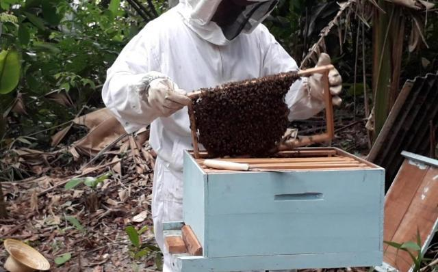 Porto Velho - Semagric intensifica programa para incentivar produção de mel - Gente de Opinião