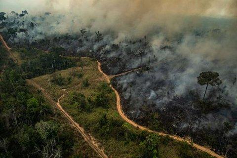 A Amazônia pode desaparecer como floresta e isso vai impactar o mundo todo
