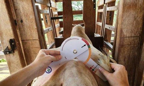 Embrapa desenvolve tecnologia simples e acessível para avaliação de carcaça bovina