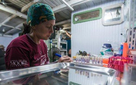 Em 20 anos, pesquisadores do Instituto Mamirauá descobriram 23 novas espécies de animais na Amazônia