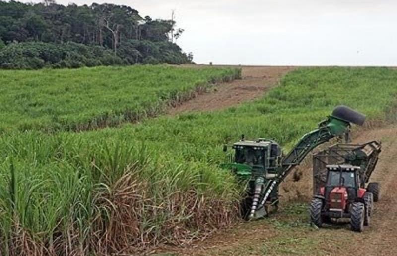 Brasil não reduz emissões, que vão piorar com cana na Amazônia e no Pantanal