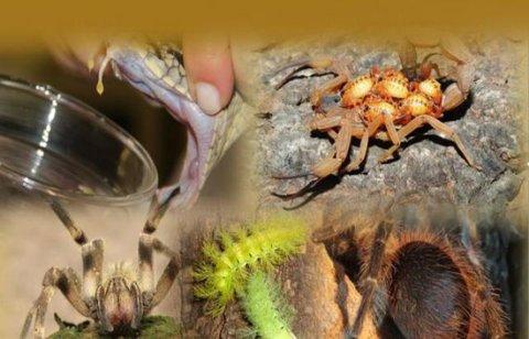 Rondônia: Agevisa alerta sobre animais peçonhentos que já provocaram mais de 1.500 acidentes neste ano