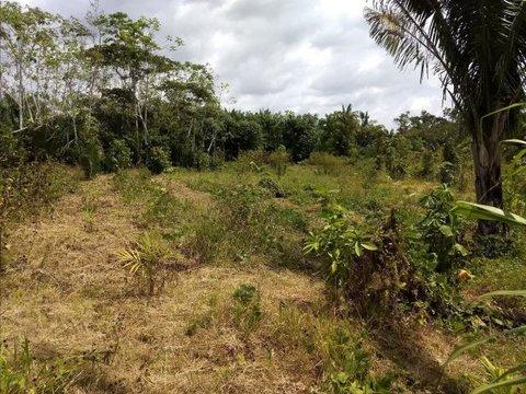 Projeto financiado pela Confiancelog para a Iniciativa Verde na Amazônia passa ileso por incêndios e desmatamento