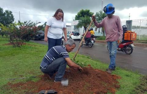 Secretaria de Meio Ambiente arboriza avenidas em Vilhena com mudas de ipê e oiti